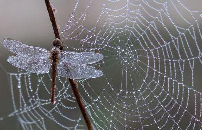 Poetry: Dusk by Darren White